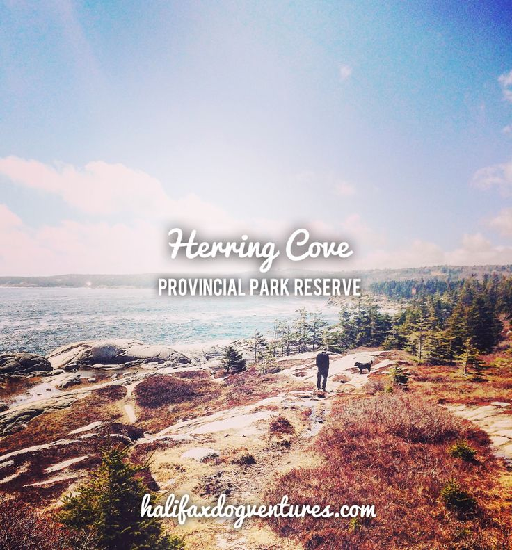 Herring Cove Provincial Park in Halifax, Nova Scotia is a stunning place for a seaside dogventure.