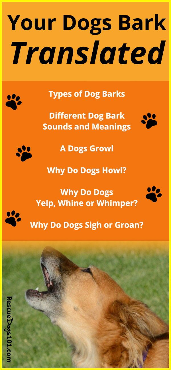 Types Of Dog Barks Dog Noises Dog Growling Dog Barking