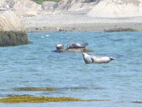 On aime les phoques du Parc national du Bic!