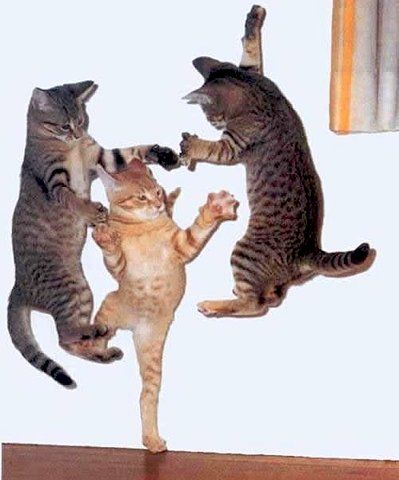 GETTIN' WEIRD. #catober