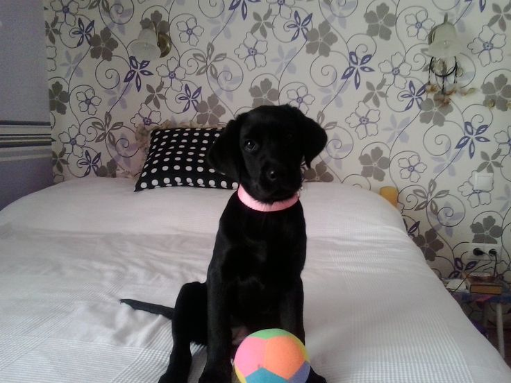 This is my new  puppy, Bella!