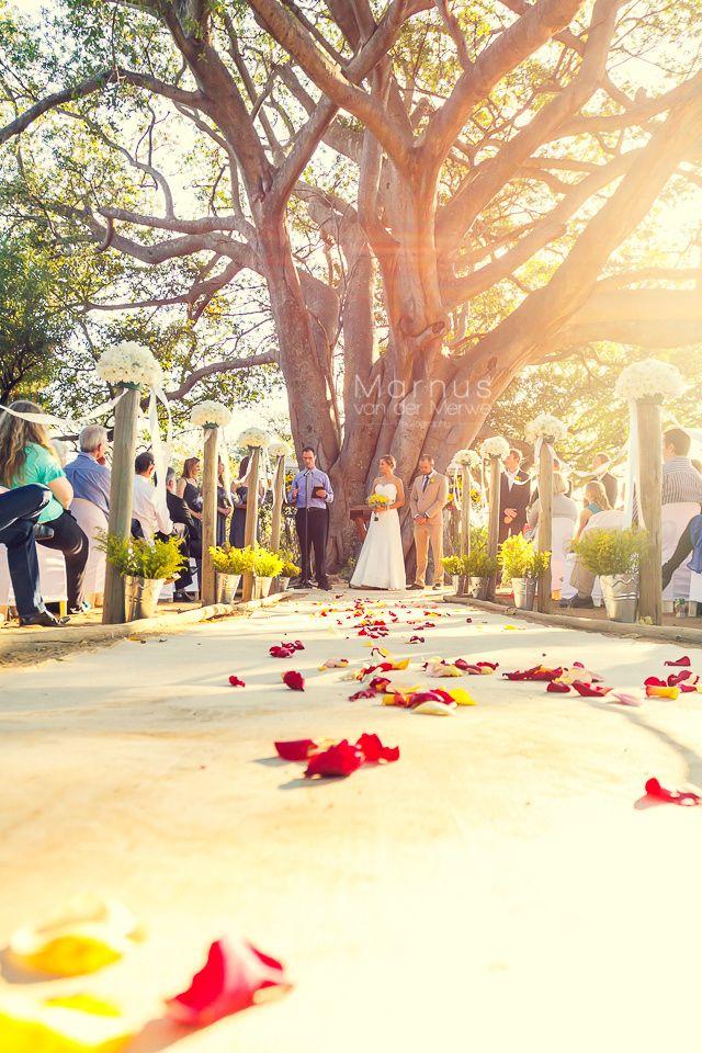CJ&Tarryn - Tree by Marnus van der Merwe on 500px #weddingphotographer