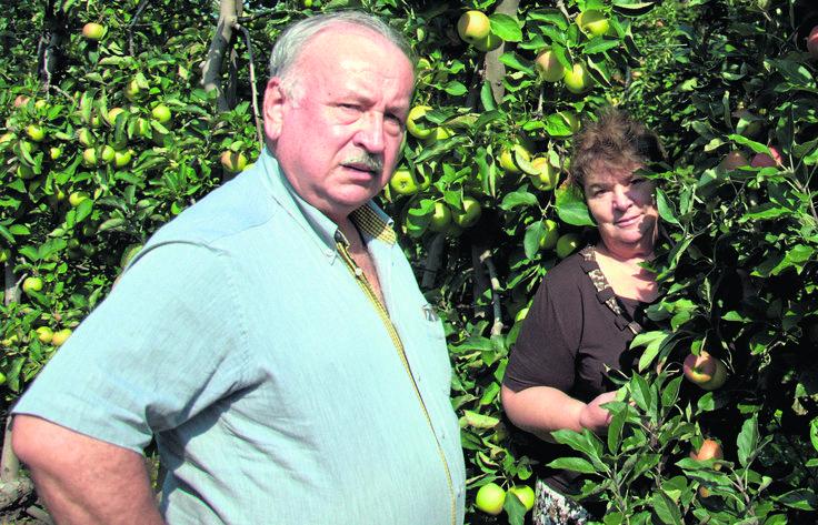 Rosyjskie embargo na polskie owoce i warzywa to cios dla polskich rolników i sadowników. Nawet ci, którzy nie eksportowali ich bezpośrednio naWschód, już liczą straty. Ilość jabłek, które trafią jesienią na nasz rynek, drastycznie obniży ich ceny. Sadownicy mówią, że owoców nawet nie opłaca się zbierać.