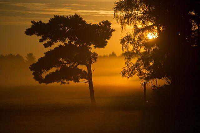Die Zeit des Frühnebels Die Morgenstunden präsentieren sich dieser Tage immer häufiger mit Nebel. Die flachen Schleier verwandeln jeden Sonnenaufgang in ein Erlebnis, so wie hier auf der Insel Usedom. Bildquelle: dpa