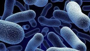 CARACTERÍSTICAS La única célula que la forma es la más pequeña. Viven en todas las partes de nuestro planeta: en el suelo,en el aire, en el agua, en el interior de otros seres vivos. LOS VIRUS Los virus no son auténticos seres vivos. Esto debe a que solo pueden reproducirse dentro de el organismo, al que causan enfermedades como la gripe o la varicela.Por esto virus significa veneno o toxina.