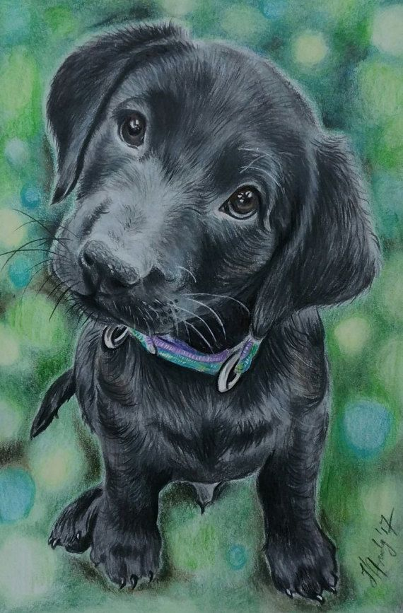 Dog puppy custom portrait Dog Cat memorial Pet Artwork