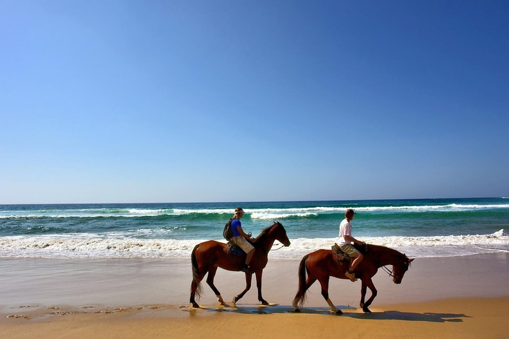 Horseback riding at the north end of Brigantine Island.  Permitted Oct 1 through March 31st.