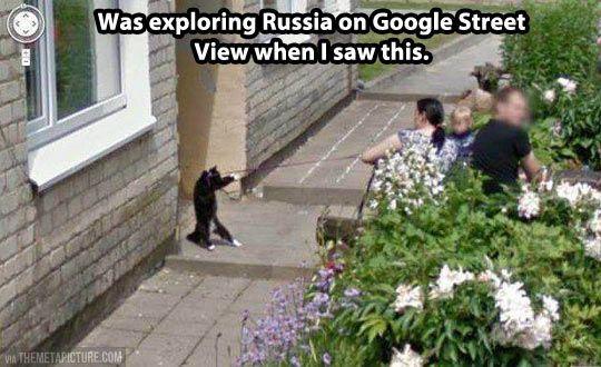 Koty w Rosjii na google street view.