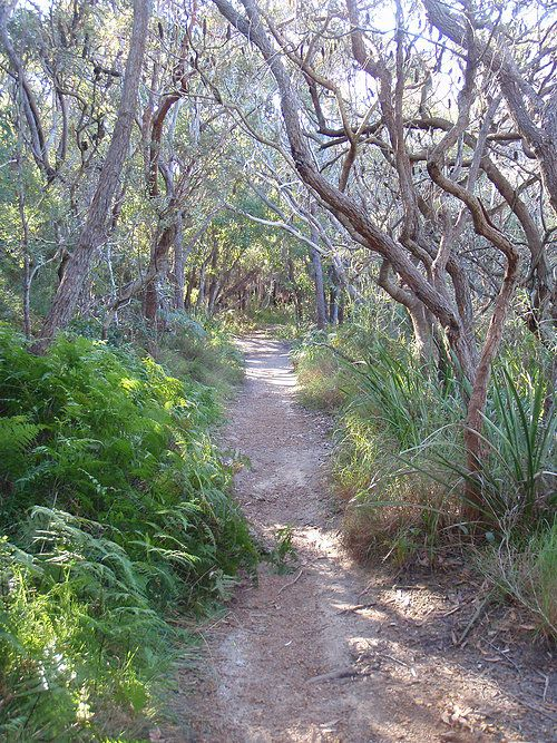 Squiggly Gum track on the way to Hyams Beach