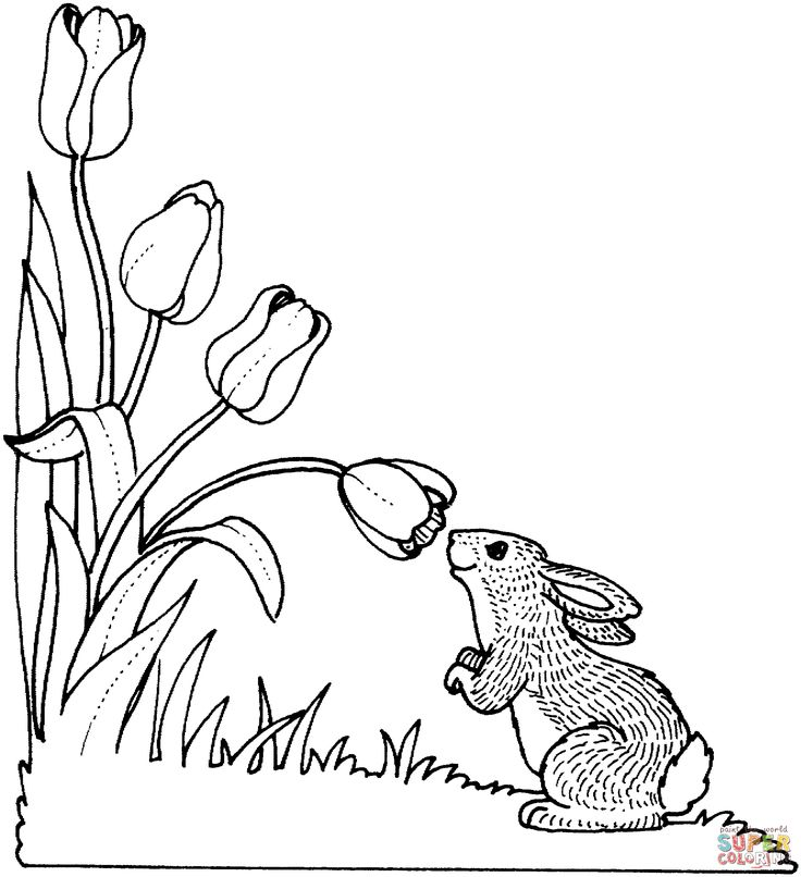 Free Tulip Coloring Pages With