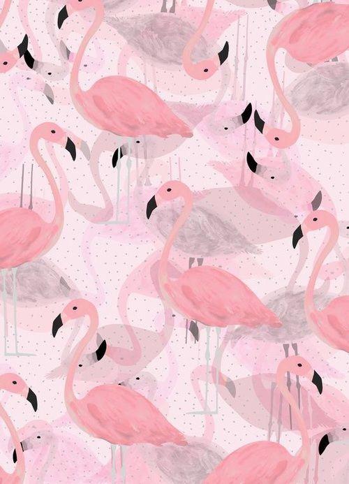 Imagen de pink, flamingo, and animal                                                                                                                                                                                 Más
