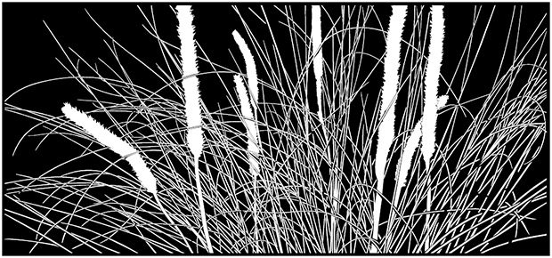 Small Grass Tree<em> Xanthorrhoea minor Australian grasses. Cutout laser cut Grasses, Sedges and Rushes projects, designs and concepts. screens, panel,art, divider