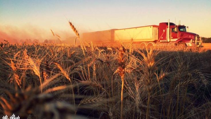 HARVEST is under way across #‎NSW. Don't forget to thank a farmer!  During harvest farmers give up meals at their table so we can have meals at ours. #‎Farmers #‎FarmingAustralia #‎AustralianFarms #‎FarmProperty