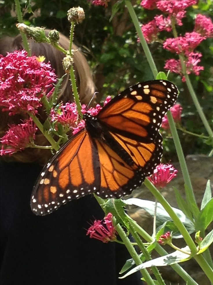 17 best images about beautiful places on pinterest parks monarch butterfly and cas