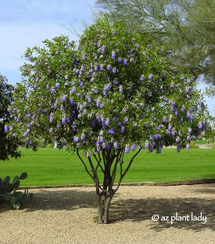 44 Best Trees Bushes Images On Pinterest Beautiful Gardens Garden Plants And Garden Trees