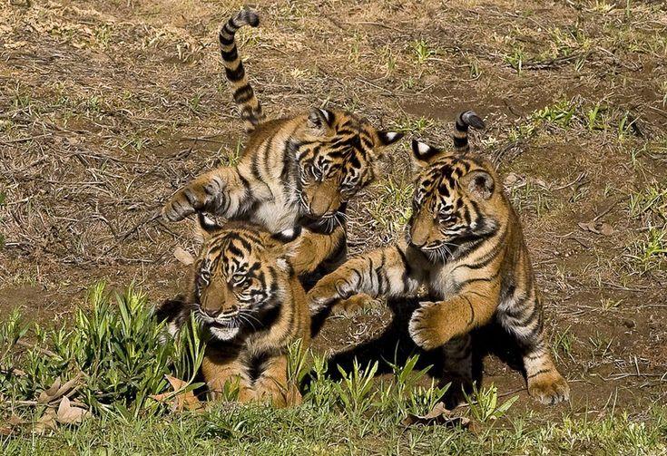 Зоопарк — фото диких животных в неволе