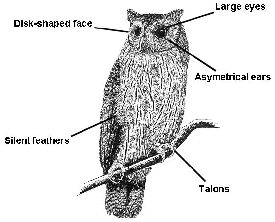 79 best images about animal adaptations 3.4 on Pinterest   Animal ...