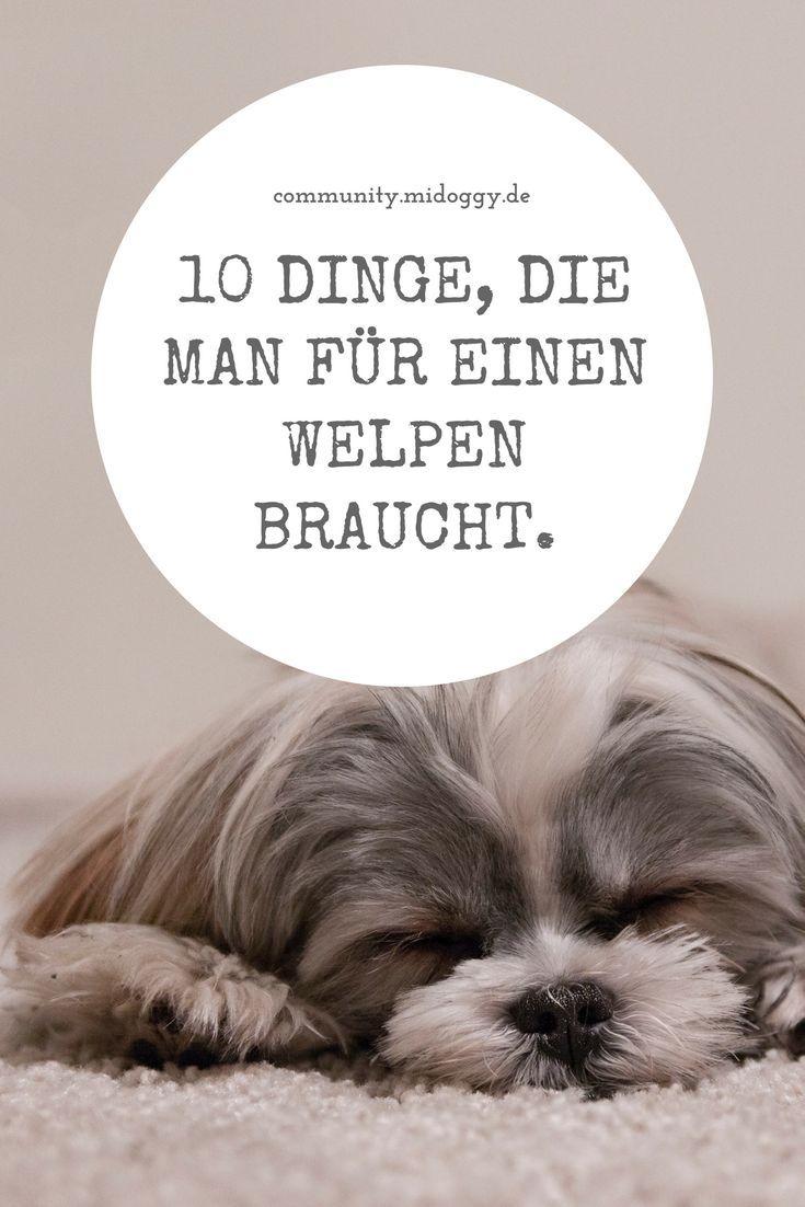 Pin Auf Leben Mit Hund
