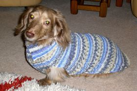Crochet Pattern for a Dachshund Sweater (free)