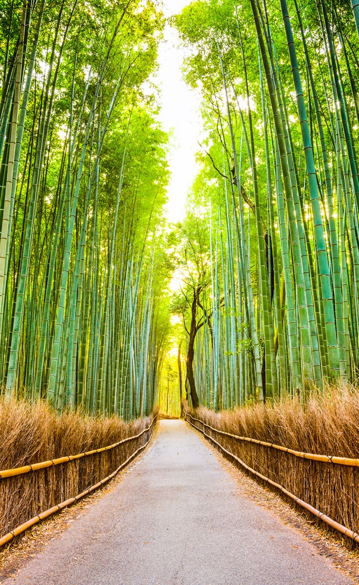 Groupon Cape Cod Getaway Part - 28: Want To See This Bamboo Forest In Person? Use Groupon To Plan A Trip To
