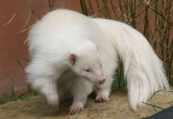 8 Examples of Albinism in the Animal Kingdom | Featured Creature