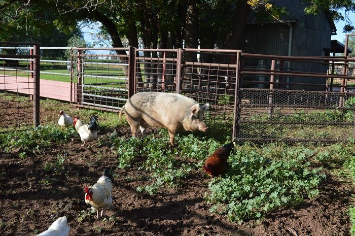 Aussie Farm Stay Accommodation on our Sydney - Melbourne and Melbourne - Sydney tours