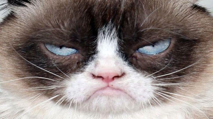 2012 yılında huysuz surat ifadesi ile bir internet fenomeni haline gelen 'Grumpy Cat', ABD'de ölümsüzleştirildi. Detaylar ajanimo.com'da.. #ajanimo #ajanbrian #hayvan #animal #kedi