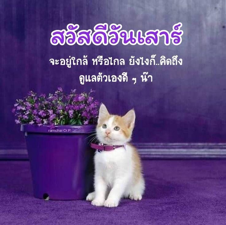 ป กพ นโดย Ramchai Chuenbumrung ใน สว สด ว นเสาร แมวน อย แมว อร ณสว สด