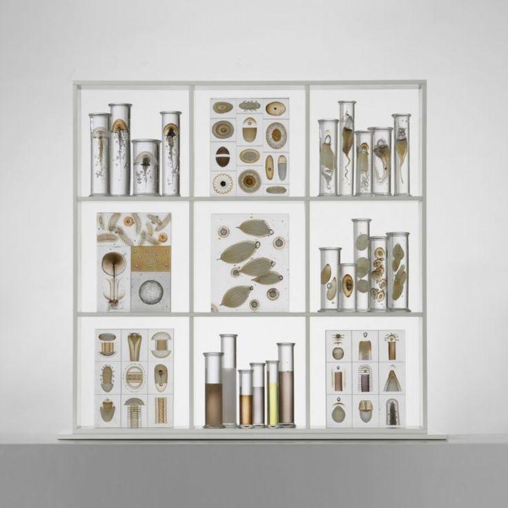 Cabinet-of-curiosities - Steffen Dam