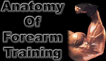 Anatomy Of Forearm Training!