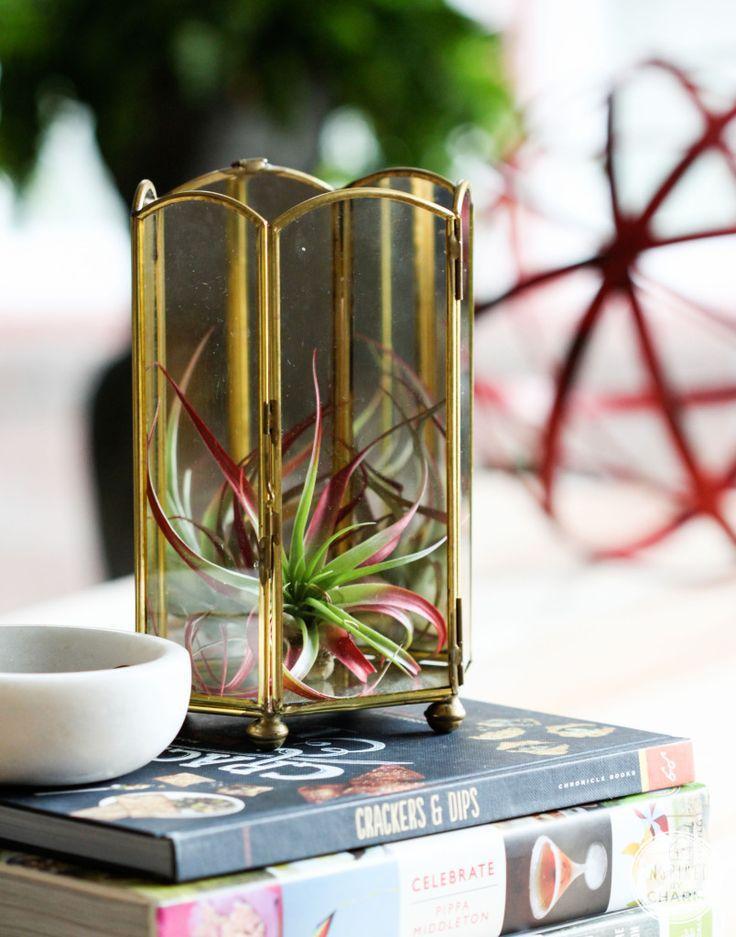 Turn a thrift store found figurine display piece into a mini terrarium!