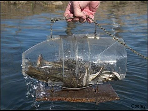 how to make a minnow trap - Google Search