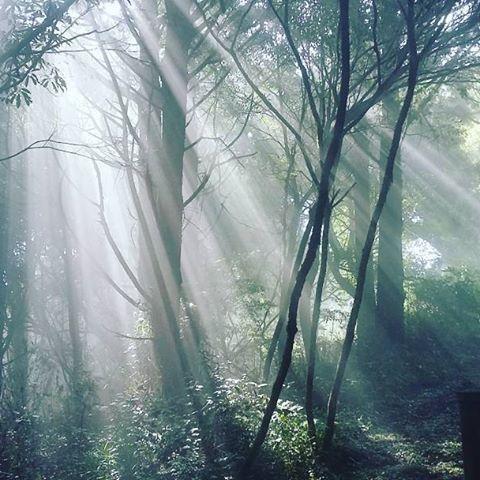【paffeeu】さんのInstagramをピンしています。 《On the road to Ogasawara mountain. #ogasawara #mountains #forest #light #fog #road #nature #大自然 #自然 #陽光 #白色 #white #白 #阿里山 #路 #山 #臺灣 #森林 #霧氣 #もり #台湾 #森 #góry #Tajwan #las #światło #mgła #霧靄》