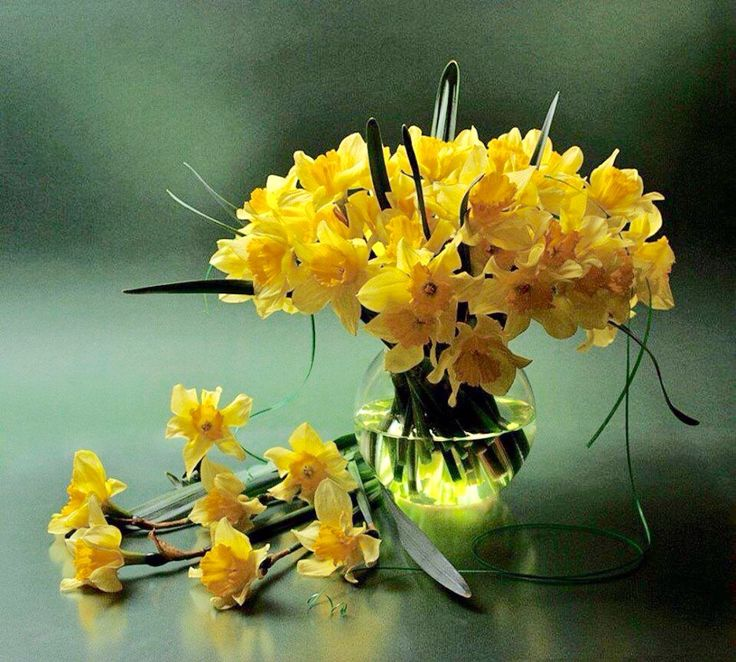 Daffodils. ❤️