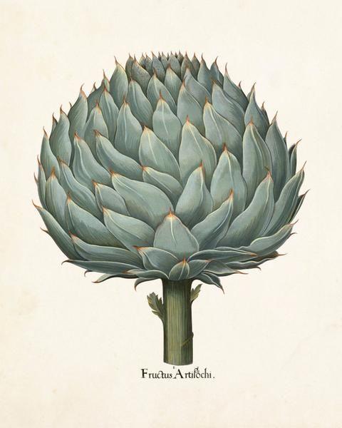 Antique Artichoke No. 1 Botanical Print