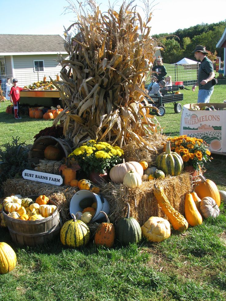 For a large display like this one, tie 6-8 corn bundles around a stake.  Surround with straw bales.  Add mums, pumpkins, gourds, corn, buckets and baskets to fill in the empty spaces.