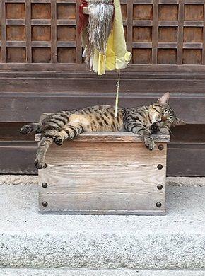 小銭よりかつお節捧げなきゃ 猫さまがおさい銭箱の上でお眠りになられお参りができない事案が発生 にゃんということでしょう。 http://nlab.itmedia.co.jp/nl/articles/1607/01/news135.html