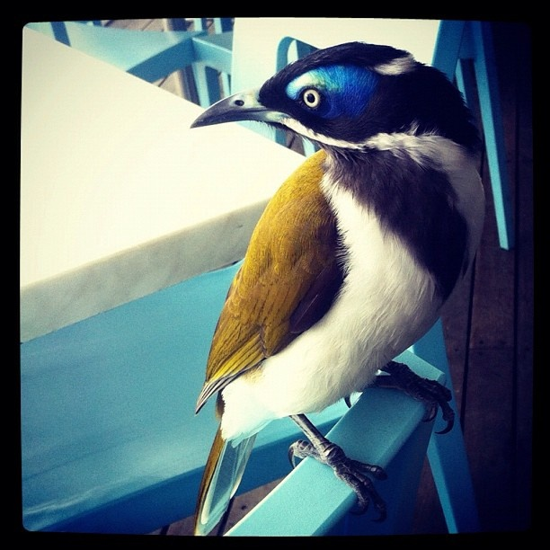 One of the locals at the Noosa Heads Surf Club swings by. #ThatPlace #HoorooQLD