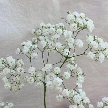 FiftyFlowers.com - New Love Baby's Breath Flower