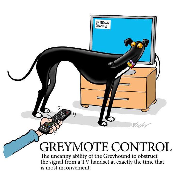 Black Greyhound Racing Dog Cartoon