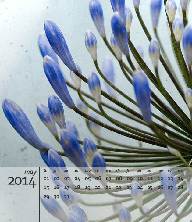preview of free 2014 calendar