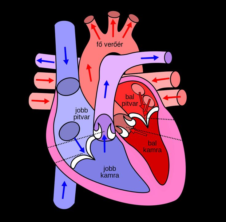 Human Heart Pictures with Labels Best Of File Diagram Of ...