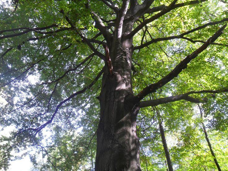 erdmancyjŏ: Mistycyzm drzew, a nasza najbliższa okolica