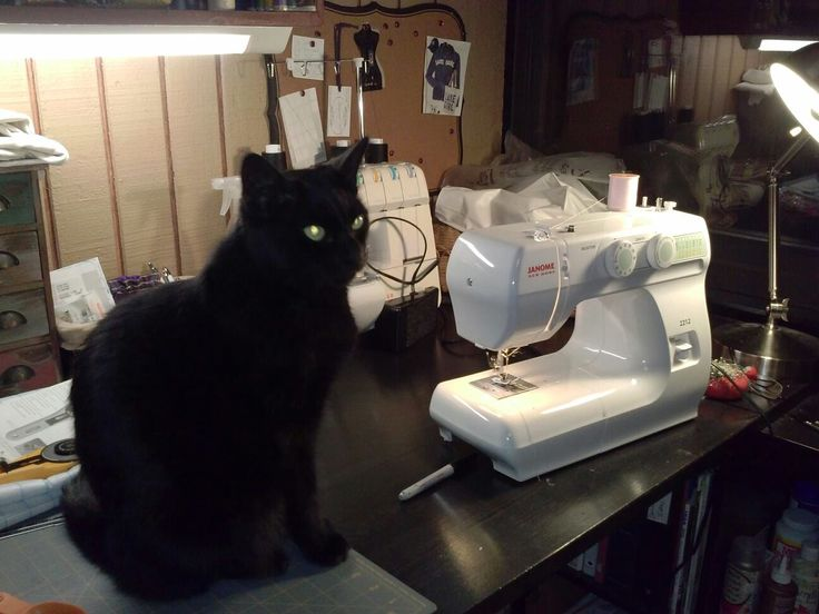Beastie oversees my production at Altered St8 Couture!  #catsupervisor #upcycledfashions #oneofakinddesigns #restyle
