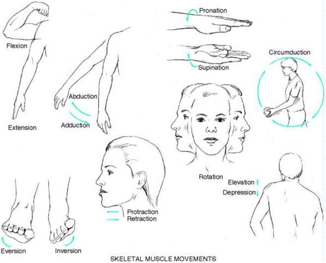 86 best musculoskeletal handout pics images on pinterest