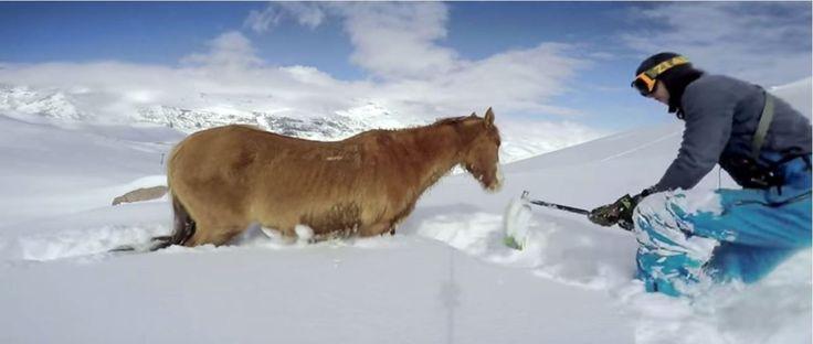 No seu 21º aniversário, Rafael Pease, saiu para fazer snowboard nestas frescas montanhas no Chile. Os seus planos mudaram quando encontrou um cavalo preso na neve. Rapidamente passou do espanto à acção… TopaIsto