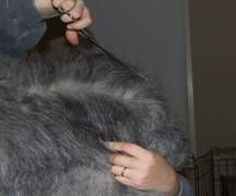 How To Groom An Old English Sheepdog