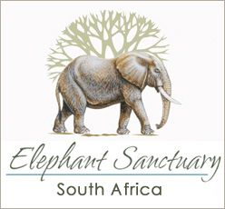Elephant Sanctuary, Hartbeespoortdam, Plettenberg Bay, South Africa