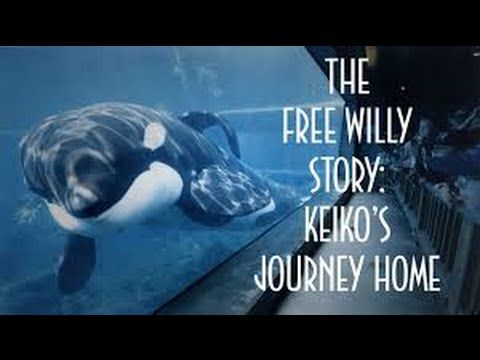 The Free Willy Story Keiko's Journey Home (Full Documentary) - YouTube