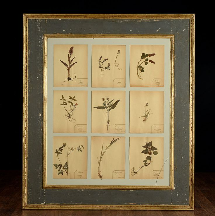 Framed Herbarium With Nine Pressed Plants or Flowers Antiqued Painted Frame with Gold Detailing, Made in France  2 Available in New York